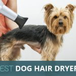 Best Dog Hair Dryer to Dry Your Dog Quickly & Easily