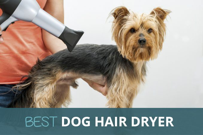 Dog Grooming Hair Dryer Blower With Stand Buy Online In Uk