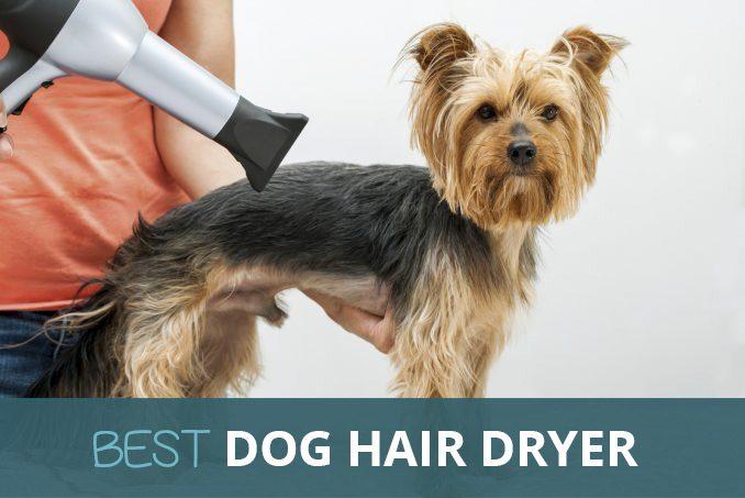 Best Dog Grooming Hair Dryer Reviews 2019 | Pooching Around