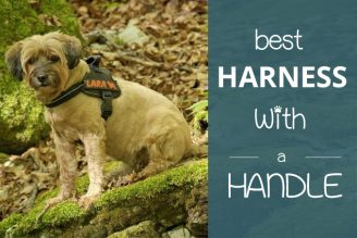Buy Dog Harness with Handle for Lifting at Amazon UK