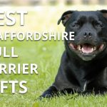 Best Staffordshire Bull Terrier Gifts For The Staffy Lover In Your Life