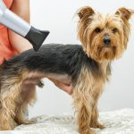 Best Dog Grooming Hair Dryer – Dry Your Dog Quickly and Easily