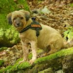 Best Dog Harness with Handle 2018: Lift Your Dog When Needed