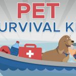 Our Helpful Infographic About Emergency Survival Kits For Dogs