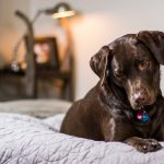 Best Luxury Dog Beds: 8 Beds For Your Spoilt Pooch