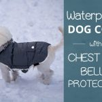 Best Waterproof Dog Coats with Chest and Belly Protection