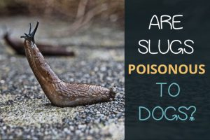 are slugs Poisonous to dogs