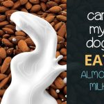 Can Dogs Have Almond Milk?