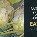 Can Dogs Eat Swede?