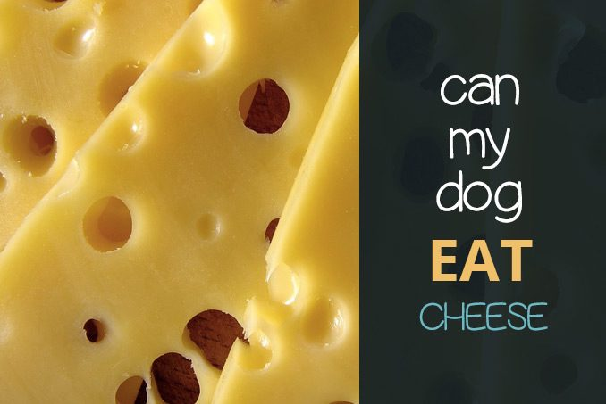 can dogs eat cheese