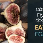 Can Dogs Eat Figs?
