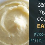 Can Dogs Eat Mashed Potatoes?