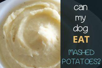 can my dog eat mashed potato