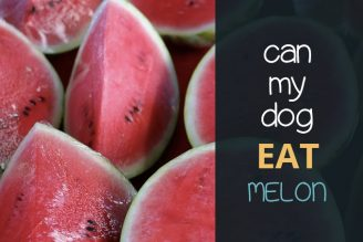 can dogs eat melon