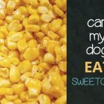 Can Dogs Eat Sweetcorn?