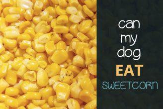 can my dog eat sweetcorn