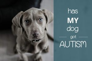 i think my dog has autism
