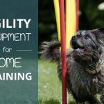 Best Dog Agility Equipment For Home Training