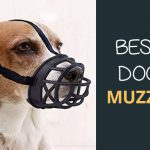 Best Dog Muzzle: Stop Biting And Barking On Walks