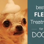 Best Flea Treatment for Dogs UK