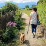 Best No-Pull Harness For Dogs