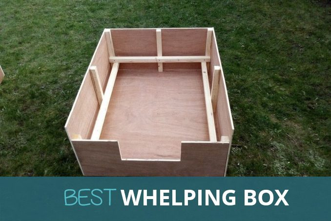 best whelping box