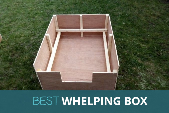 Best Whelping Box For Puppies Pooching Around