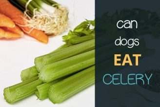 can dogs eat celery