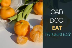 can dogs eat tangerines