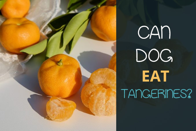 Can Dogs Eat Tangerines Find Out If They Are Safe