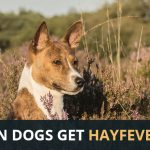 Can Dogs Get Hayfever?