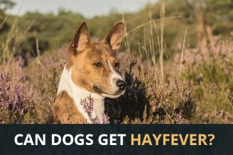 Can my dog get hayfever