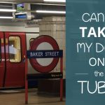 Can You Take Your Dog On The Tube?