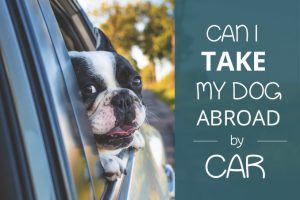 can i take my dog abroad by car
