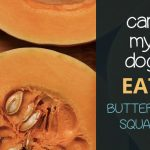 Can Dogs Eat Butternut Squash?