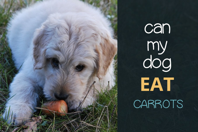 Can Dogs Eat Carrots Raw Frozen And How Often