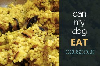 Can dogs eat couscous
