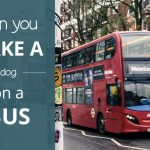Can You Take A Dog On A Bus?