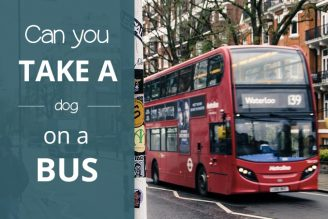 Can you take a dog on a bus