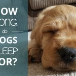 How Long Do Dogs Sleep?
