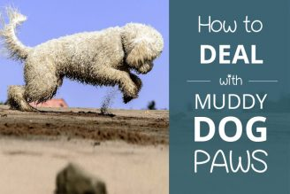 how to deal with muddy dog paws