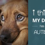 I Think My Dog Has Autism: What To Do?