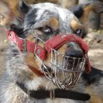 Best Dog Muzzle: A Handy Guide for Dog Owners
