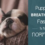 Puppy Breathing Fast: Is It Normal?