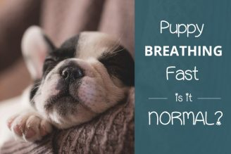 puppy breathing fast is it normal