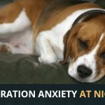 Dog Separation Anxiety at Night