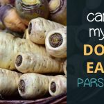 Can Dogs Eat Parsnips?