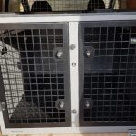 Best Dog Crate for Car Travel