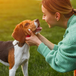 8 Ways to Show Your Dog You Care
