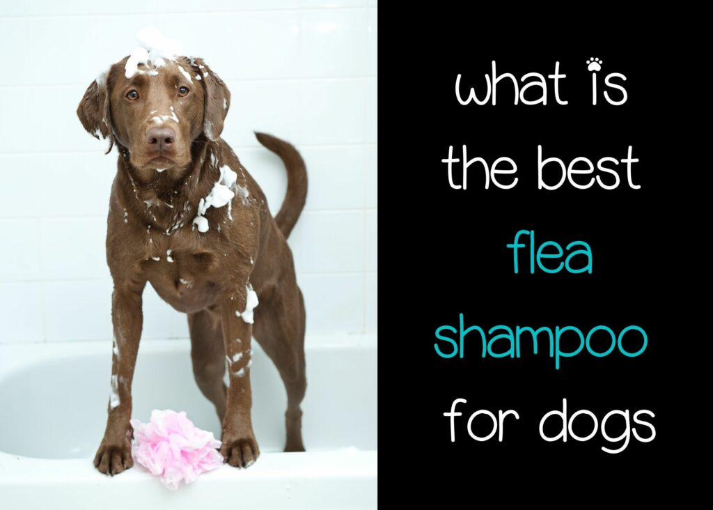 what is the best flea shampoo for dogs